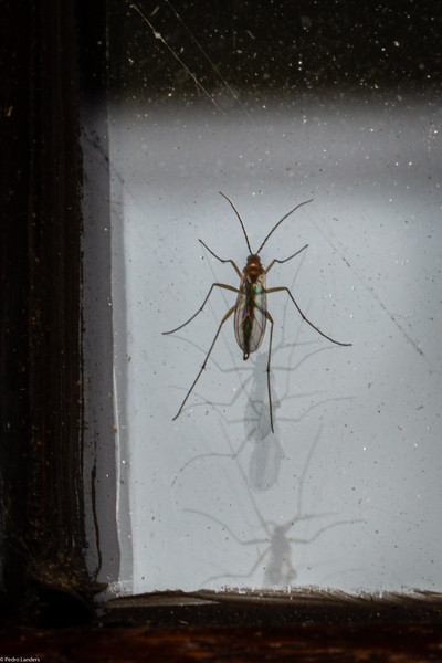 Fly on Double-Glazing