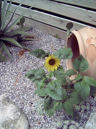 Eigen tuin 2004