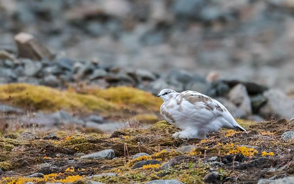 Svalbard / Spitzbergen