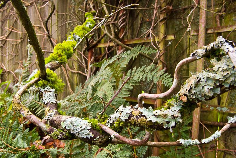 WS Kiwi Lichen.jpg