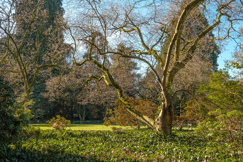 20190214_arboretum_035.jpg