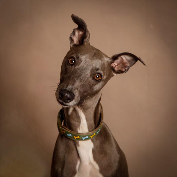 Pets - Pete Griffith - 2.jpg