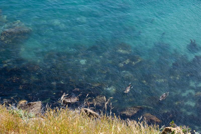 Harbor seals at Gerstle Cove