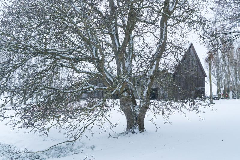winter2-8885.jpg