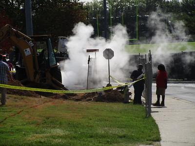 Steam damaged trees, August 26, 2015