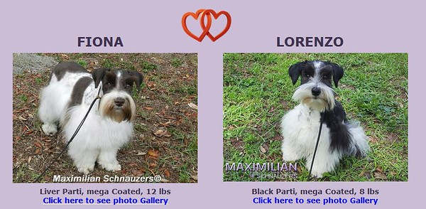 Fiona & Lorenzo's Puppy, DOB  9/04/2018