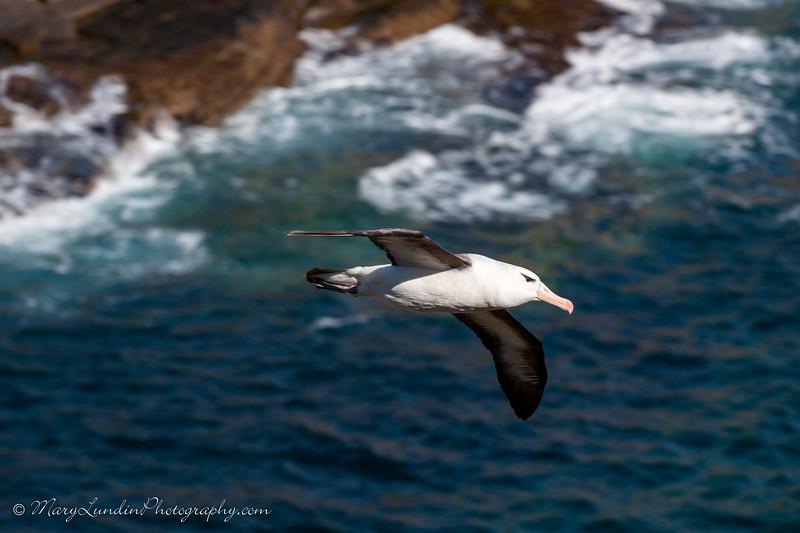 Antarctic-229