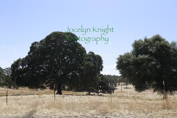 Ecology Field Trip #1 Sierra Nevada Sept 2019
