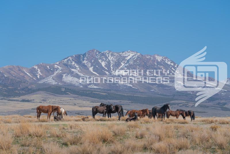 Tooele, Utah
