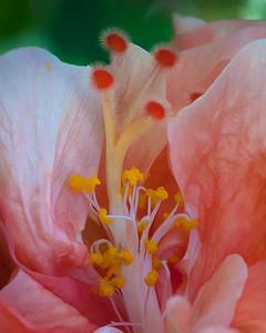 Enhanced Flowers