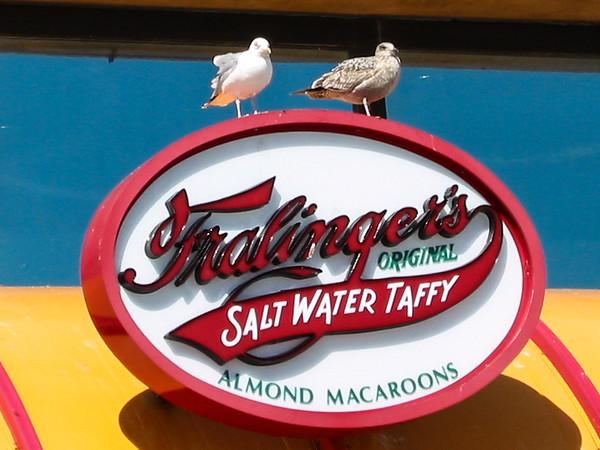 Pigeon & Saltwater Taffy