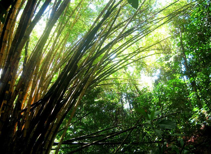 Costa Rica 08(2) 108a.jpg