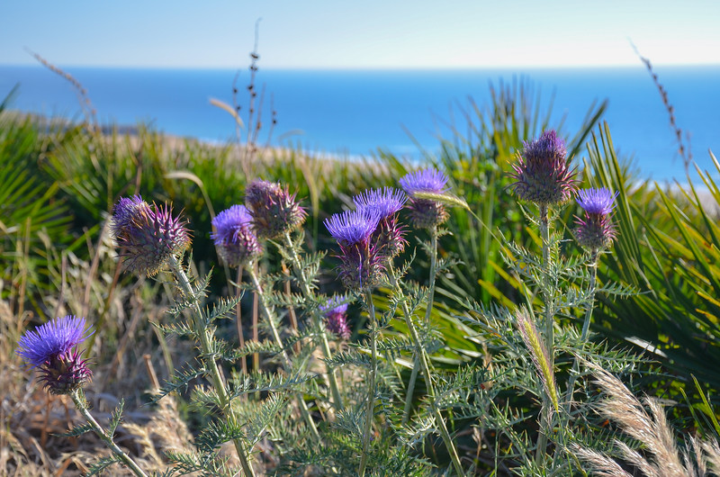 Flowers along the Coast of the Atlantic
