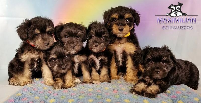 Yanabell Pups 035.jpg