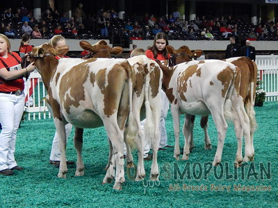 Mid-East Fall National Junior Red & White Show 2015