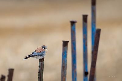 Birding December 2018