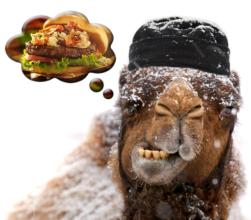 camel-snow-winter-funny-hump-day.png
