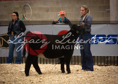Club Calf Steer/Heifer Futurity