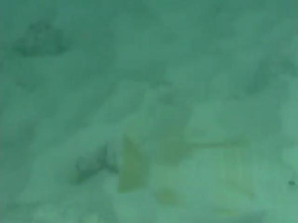 Grand Cayman 2001 Videos