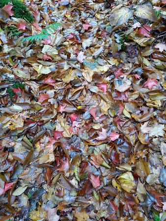 2014 Oct4-6 Maggie Lake, Algonquin