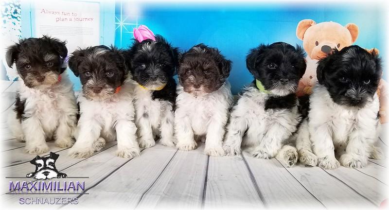 Maddie Pups 016.jpg