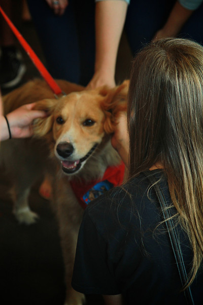 20130818_therapydogs_MH001.jpg