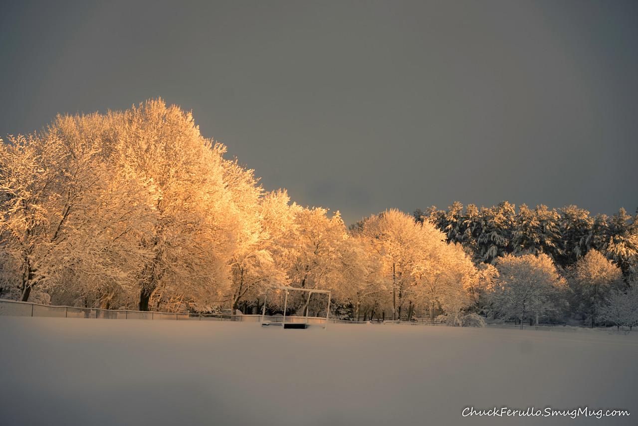 Trees, Metacomet Fields, Medfield