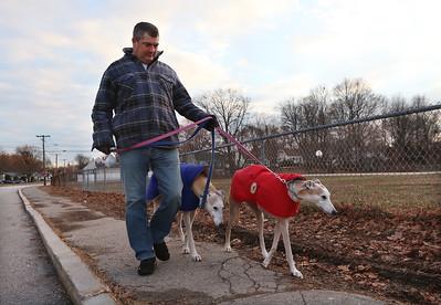 Greyhounds walking 011621