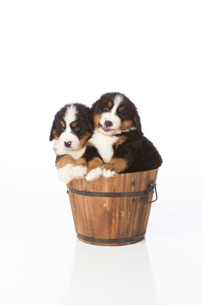 2013-Pearson Pups-Jun02-0417.jpg