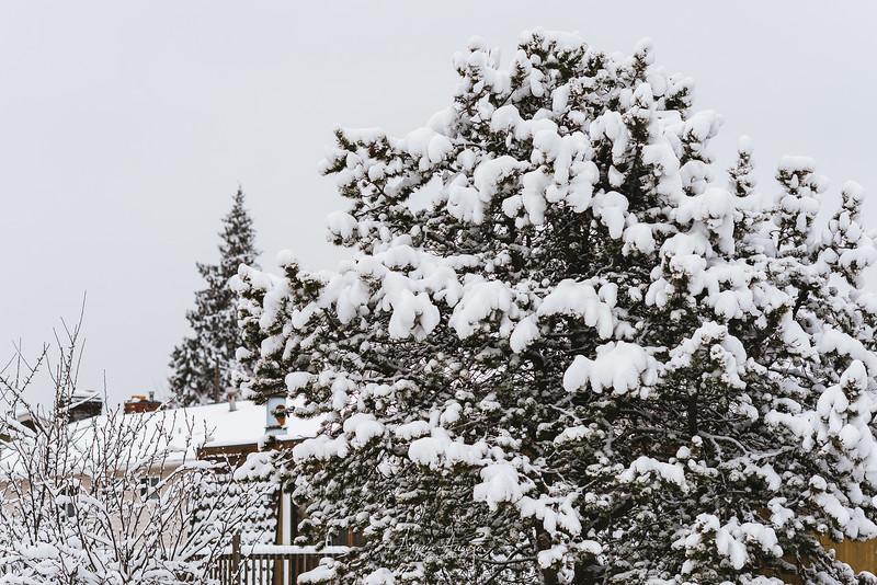 SnowWedgwoodFeb2019-7.jpg