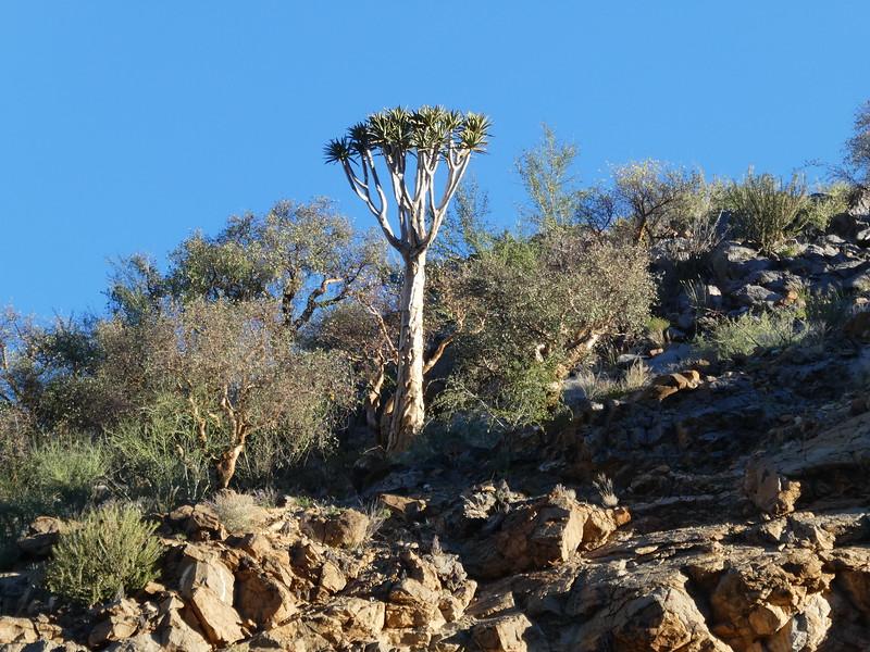 Namibia Lumix  (135).JPG