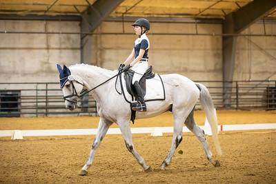 Horse 151