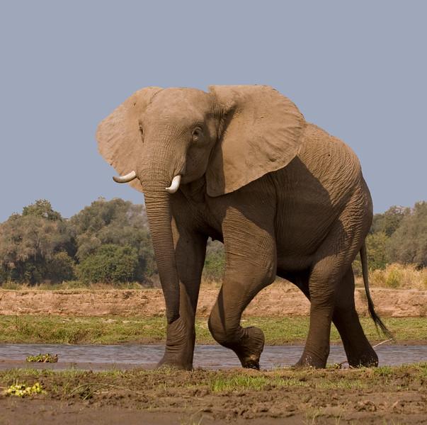 Elephant Flair-Good-LAST PAGE COLOR FIX_edited-1ZIMBABWEElephant Flair-Good-LAST PAGE COLOR FIX_edited-1.jpg