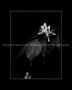 015-flower-wdsm-30may13-16x20-bw-bbp-0708