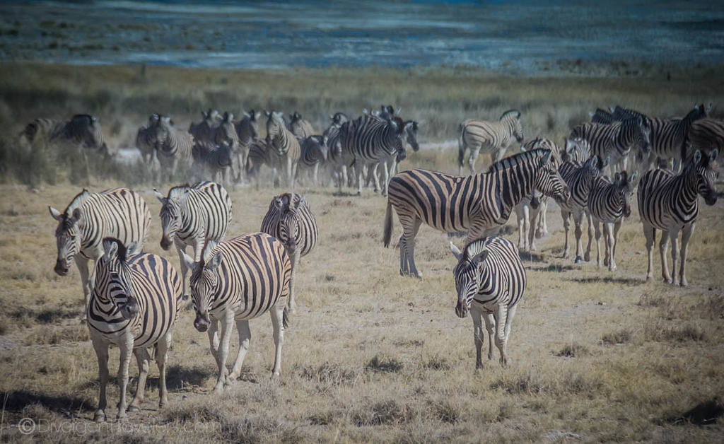 Guide to Visiting Etosha National Park in Namibia