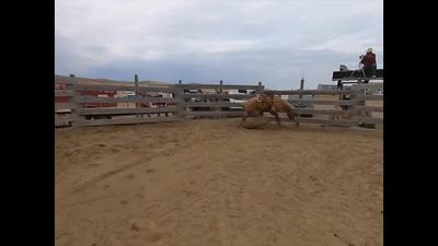 Problem Horse School Wrap Up