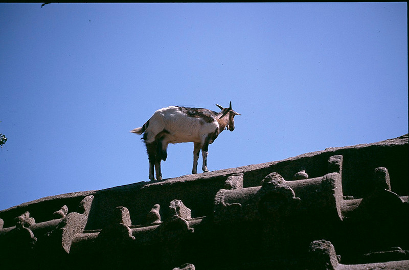 India1_042.jpg