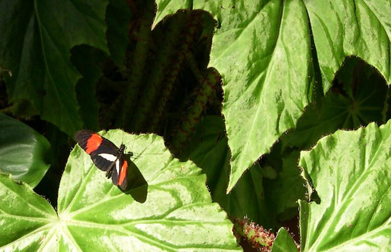 butterfly421.jpg