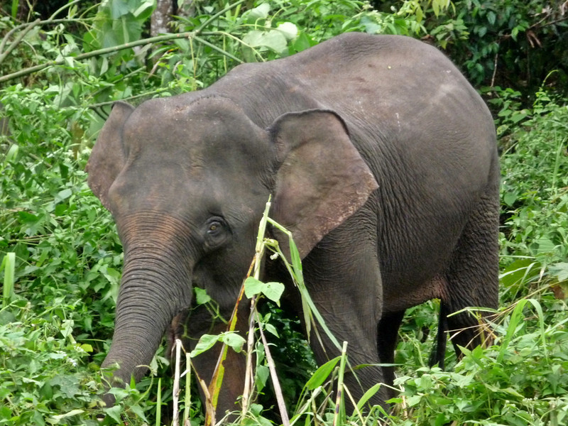 b elephant2.JPG
