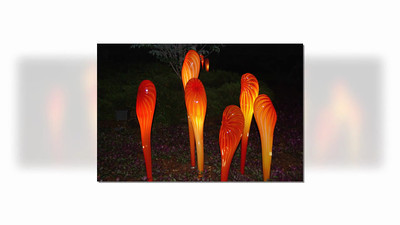 Chihully Installation at Dallas Arboretum-by Night-Joyce