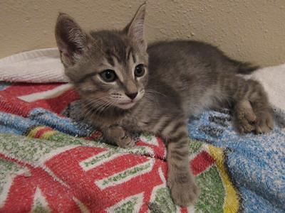 Foster Kittens - Apr 2011
