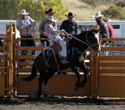 Stock Saddle Bronc ~ Sunday