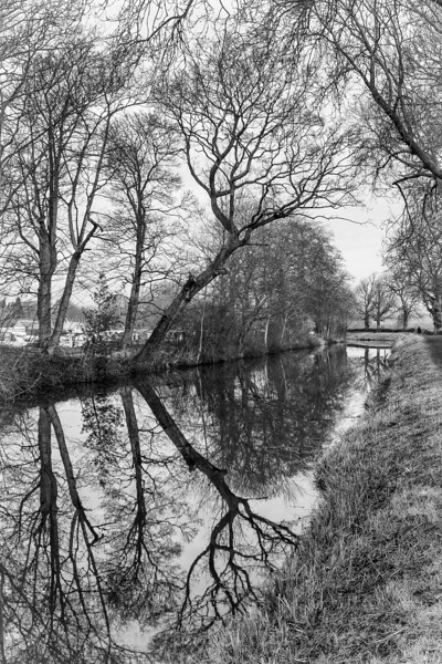 Ripon canal and robin-2.jpg