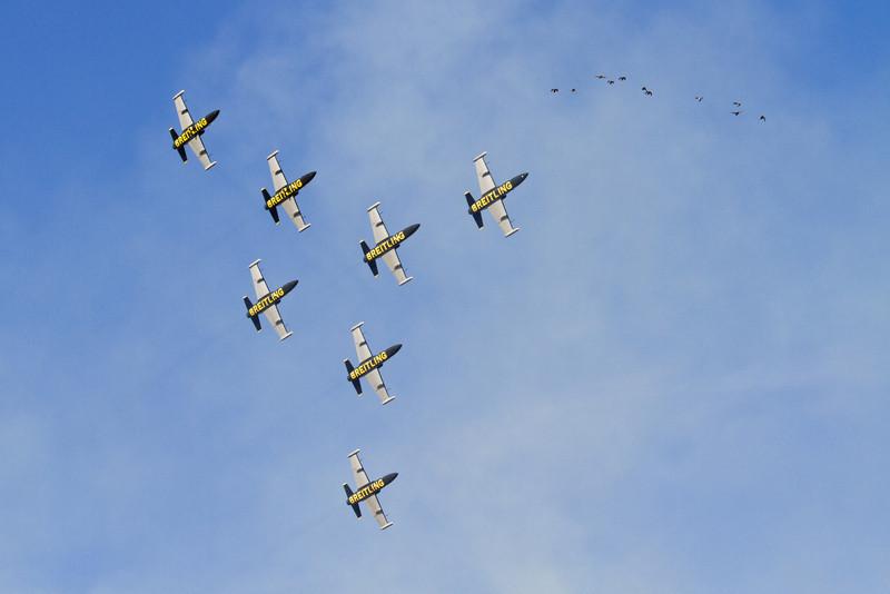 7 x L-39 Albatros, Breitling Jet Team (Franice)