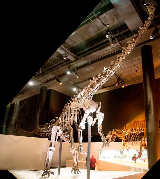 The great Diplodocus dominates the floor.