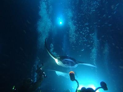 2012 Manta Rays