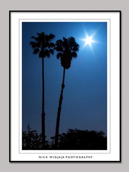 Moon Night_01 copy_1.jpg