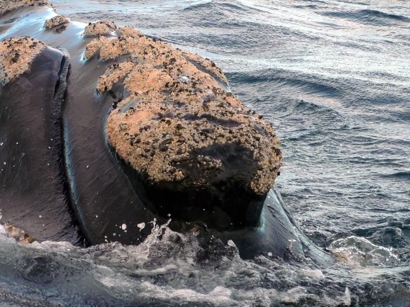 whale_11.JPG