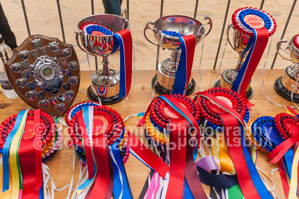 Solway and Tyne Texel Show and Sale - September 3rd and 4th 2015
