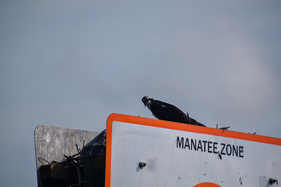 9AM Mangrove Tunnel Kayak Tour - Angel, Monroy & Treese
